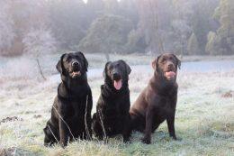Neue Fotos von der Amy, Henry und Lotta