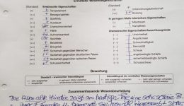 06.10.19 Wesenstest Lotta in Kiel